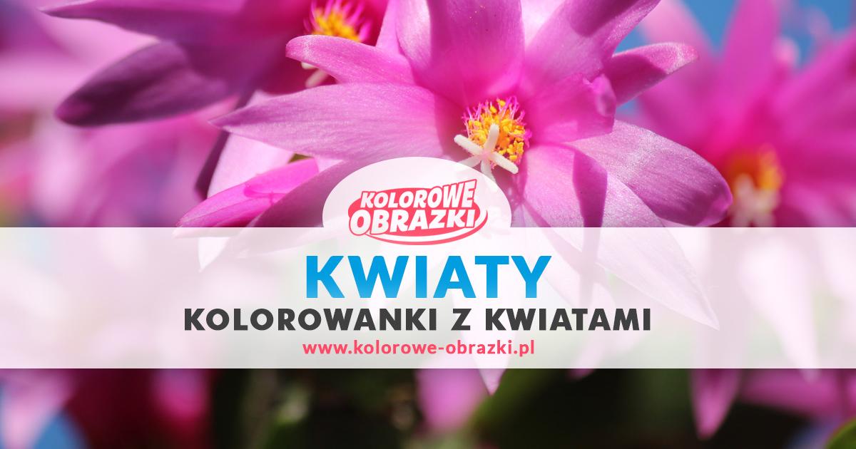 Kolorowanki kwiaty - Kolorowanki z kwiatami dla dzieci