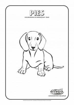 Kolorowanki ze zwierzętami - Pies. Kolorowanka z psem
