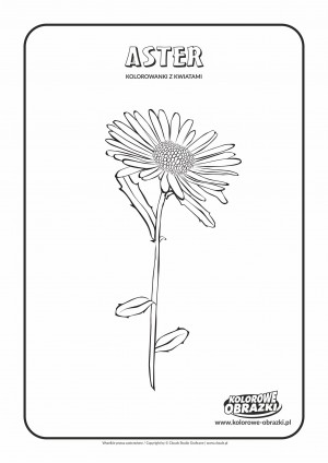 Kolorowanki dla dzieci - Rośliny / Aster. Kolorowanka z astrem