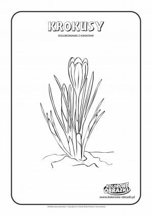 Kolorowanki dla dzieci - Rośliny / Krokusy. Kolorowanka z krokusami