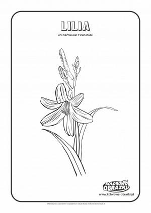 Kolorowanki dla dzieci - Rośliny / Lilia. Kolorowanka z lilią