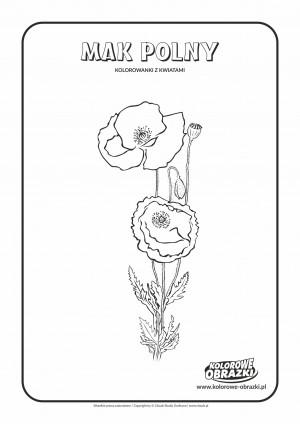 Kolorowanki dla dzieci - Rośliny / Mak polny. Kolorowanka z makiem polnym