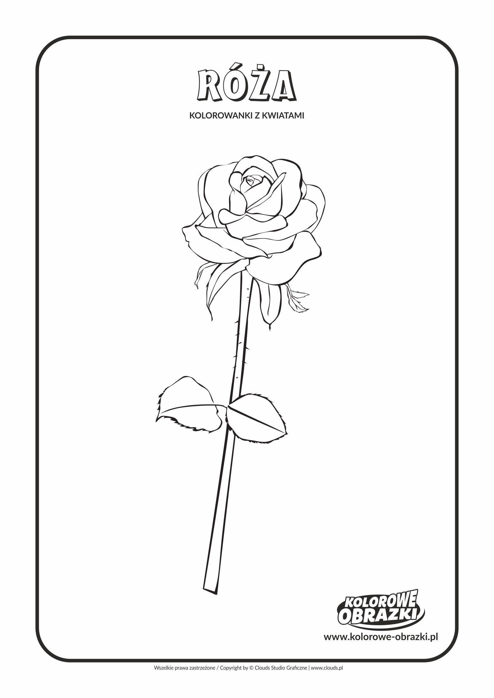 Kolorowanki dla dzieci - Rośliny / Róża. Kolorowanka z różą