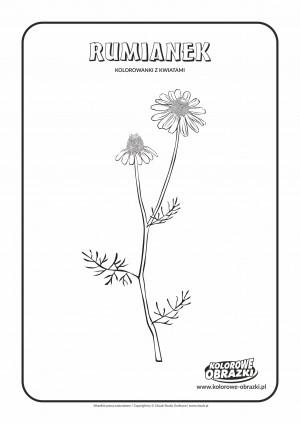 Kolorowanki dla dzieci - Rośliny / Rumianek. Kolorowanka z rumiankiem