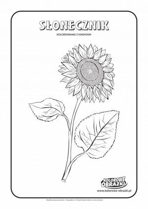 Kolorowanki dla dzieci - Rośliny / Słonecznik. Kolorowanka ze słonecznikiem