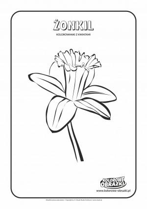 Kolorowanki dla dzieci - Rośliny / Żonkil. Kolorowanka z żonkilem