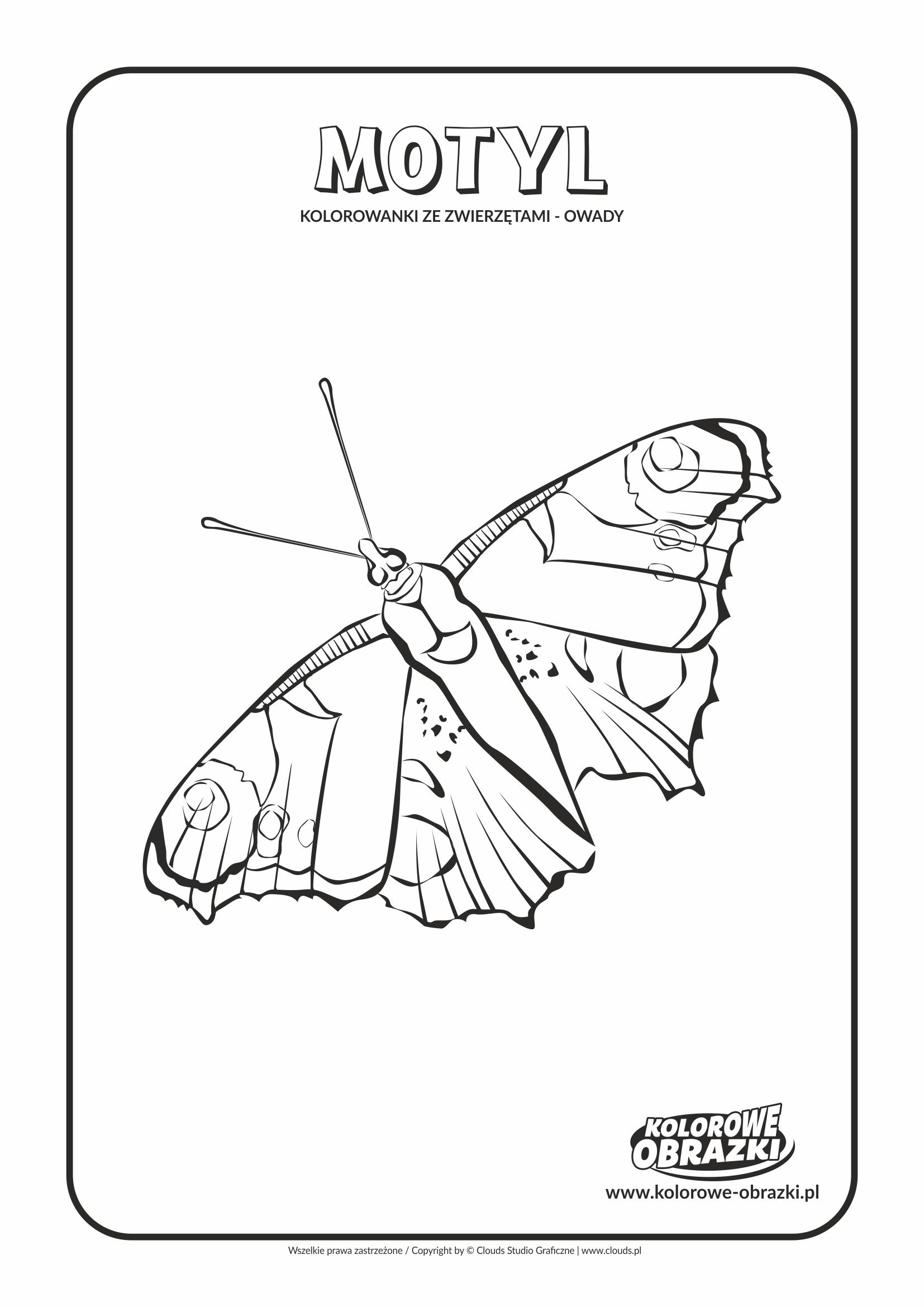 Kolorowanki dla dzieci - Zwierzęta / MOtyl. Kolorowanka z motylem