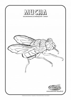 Kolorowanki dla dzieci - Zwierzęta / Mucha. Kolorowanka z muchą