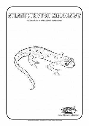 Kolorowanki dla dzieci - Zwierzęta / Atlantotryton zielonawy. Kolorowanka z atlantotrytonem zielonawym