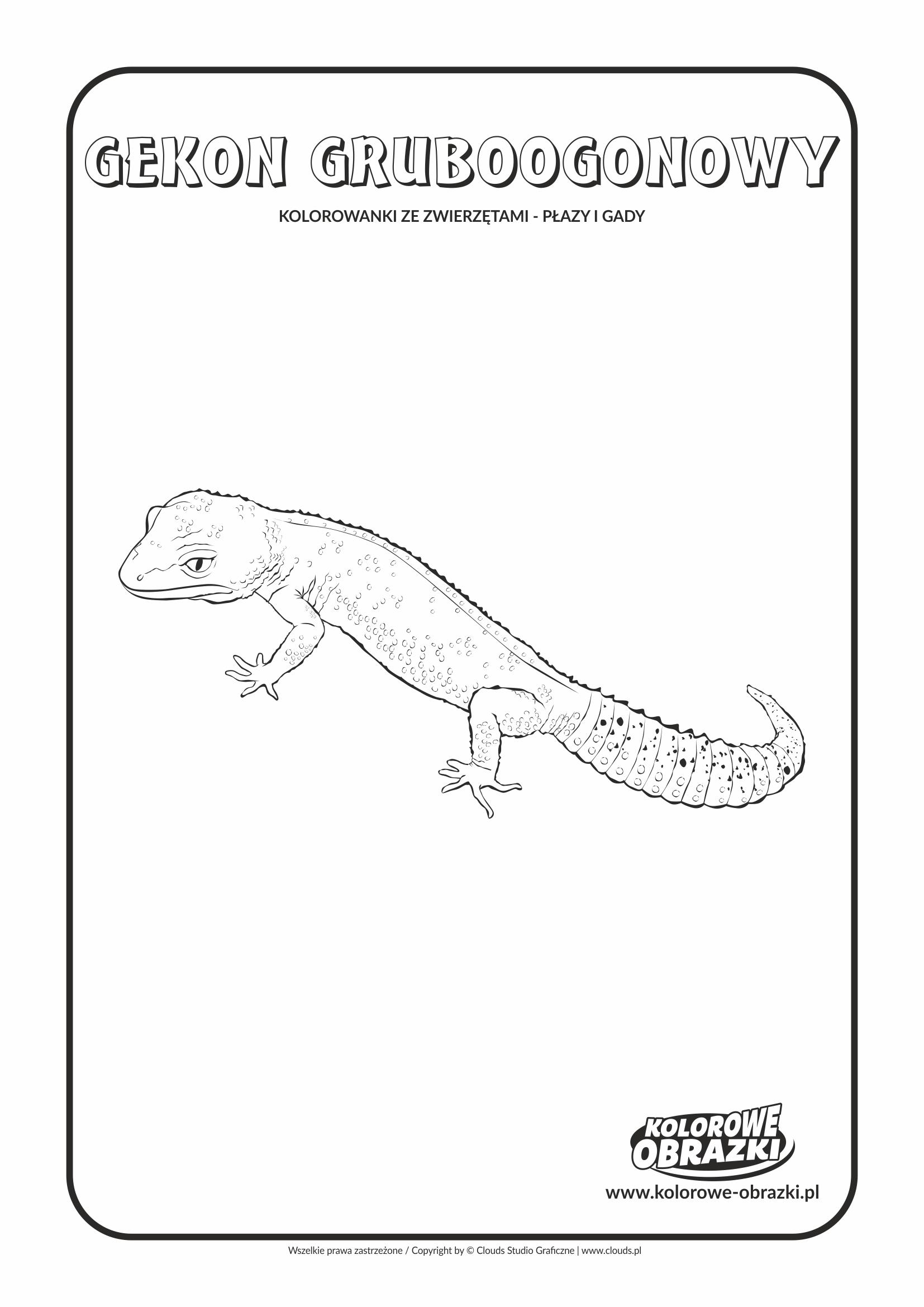 Kolorowanki dla dzieci - Zwierzęta / Gekon gruboogonowy. Kolorowanka z gekonem gruboogonowym