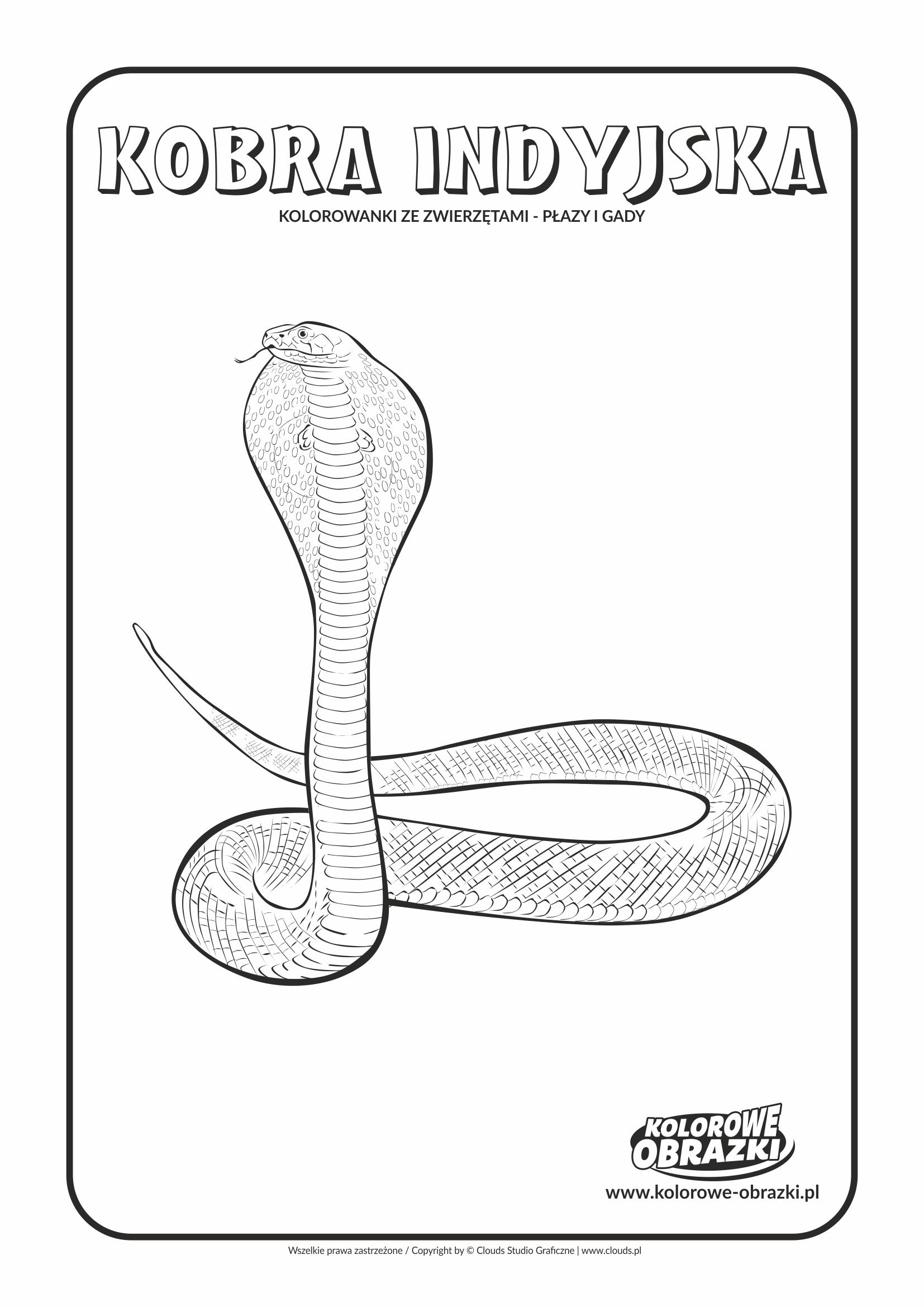 Kolorowanki dla dzieci - Zwierzęta / Kobra indyjska. Kolorowanka z kobrą indyjską