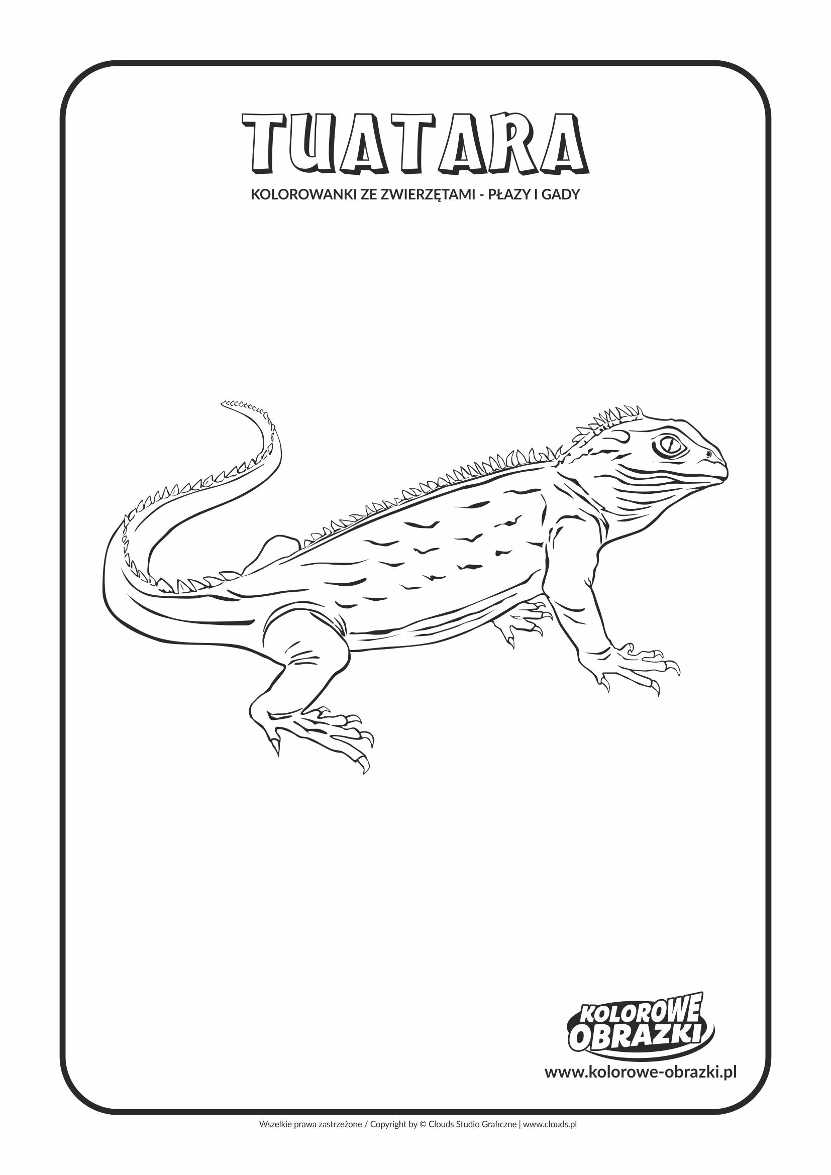Kolorowanki dla dzieci - Zwierzęta / Tuatara. Kolorowanka z tuatarą