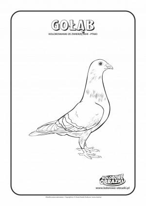 Kolorowanki dla dzieci - Zwierzęta / Gołąb. Kolorowanka z gołębiem