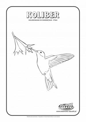 Kolorowanki dla dzieci - Zwierzęta / Koliber. Kolorowanka z kolibrem
