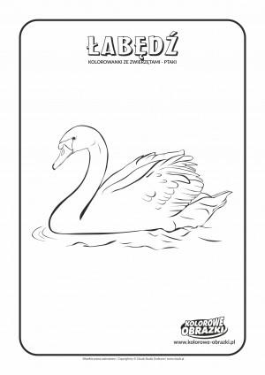 Kolorowanki dla dzieci - Zwierzęta / Łabędź. Kolorowanka z łabędziem