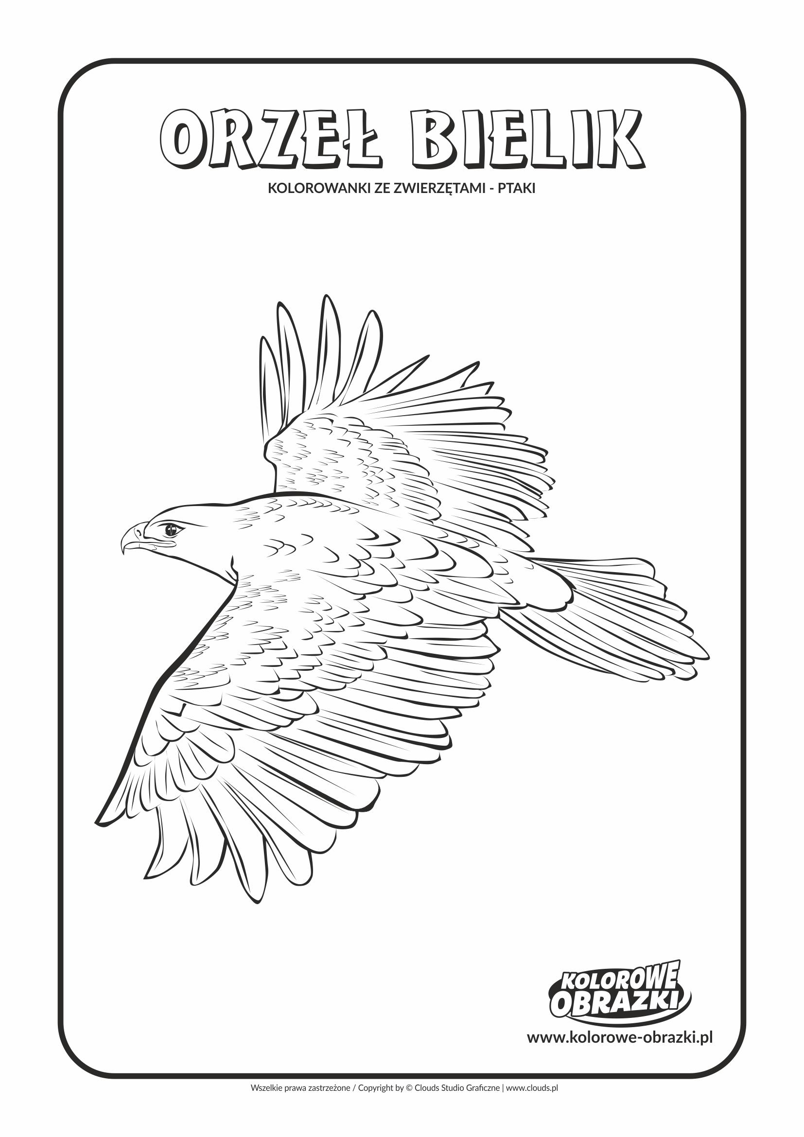 Kolorowanki dla dzieci - Zwierzęta / Orzeł bielik. Kolorowanka z orłem bielikiem