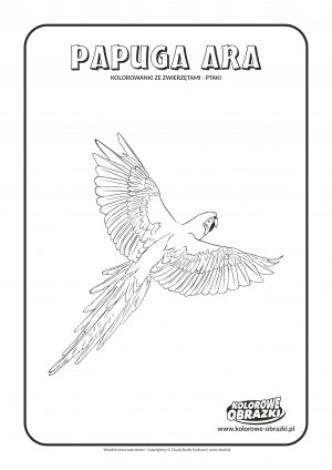 Kolorowanki dla dzieci - Zwierzęta / Papuga ara. Kolorowanka z papugą arą