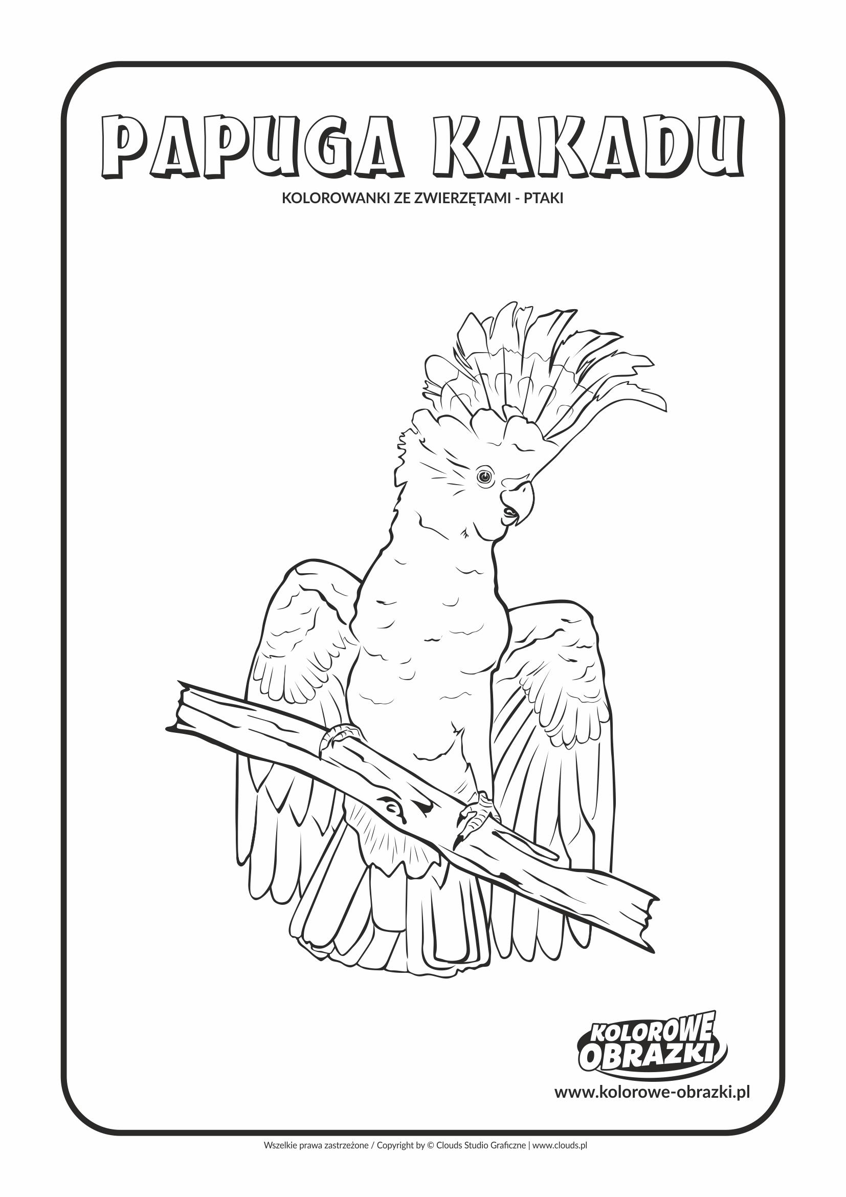 Kolorowanki dla dzieci - Zwierzęta / Papuga kakadu. Kolorowanka z papugą kakadu