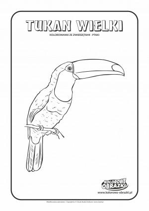 Kolorowanki dla dzieci - Zwierzęta / Tukan Wielki. Kolorowanka z tukanem wielkim