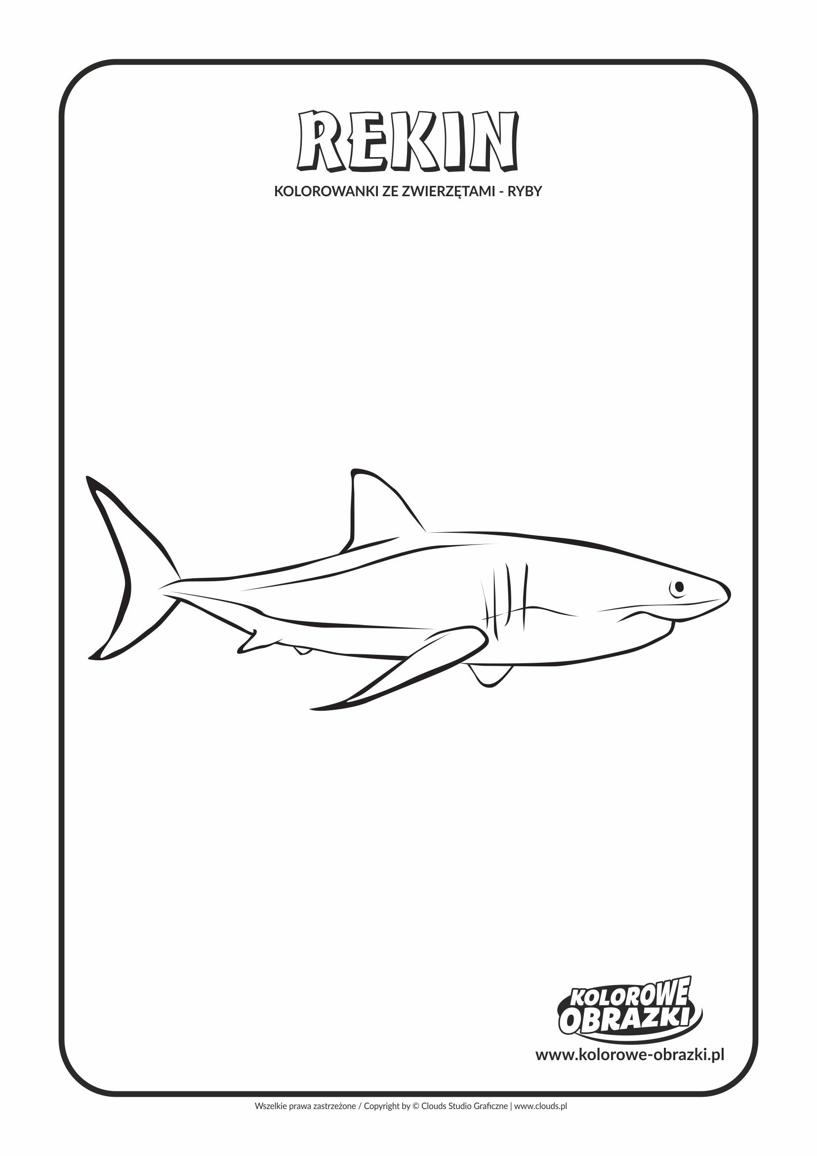 Kolorowanki dla dzieci - Zwierzęta / Rekin. Kolorowanka z rekinem