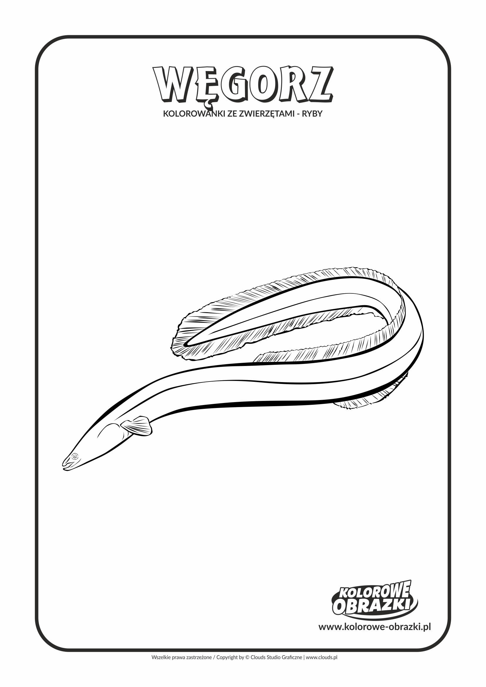 Kolorowanki dla dzieci - Zwierzęta / Węgorz. Kolorowanka z węgorzem