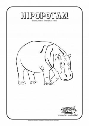 Kolorowanki dla dzieci - Zwierzęta / Hipopotam, Kolorowanka z hipopotamem