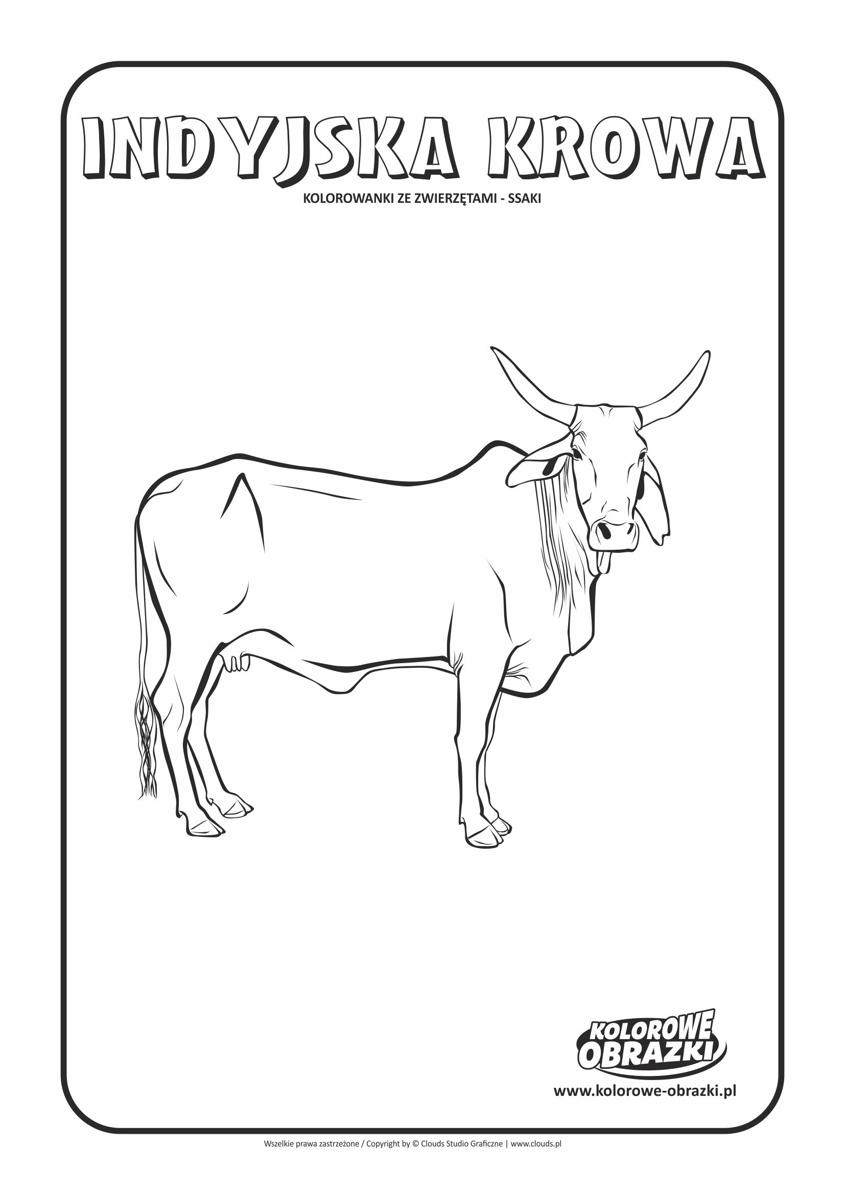 Kolorowanki dla dzieci - Zwierzęta / Indyjska Krowa, Kolorowanka z indyjską krową