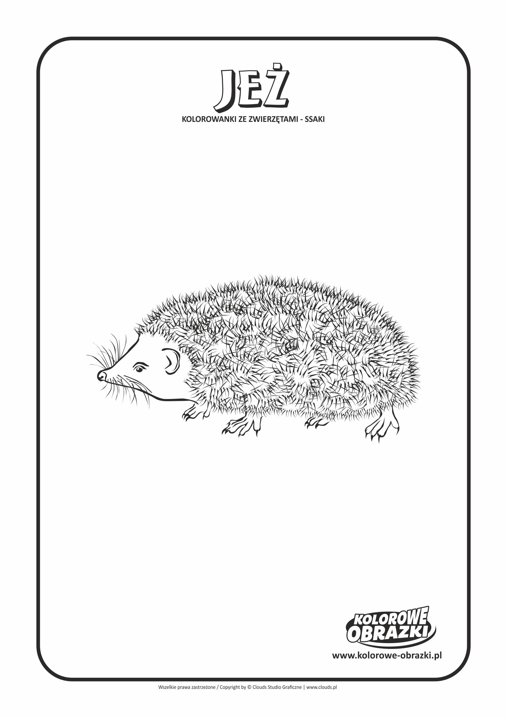 Kolorowanki dla dzieci - Zwierzęta / Jeż, Kolorowanka z jeżem