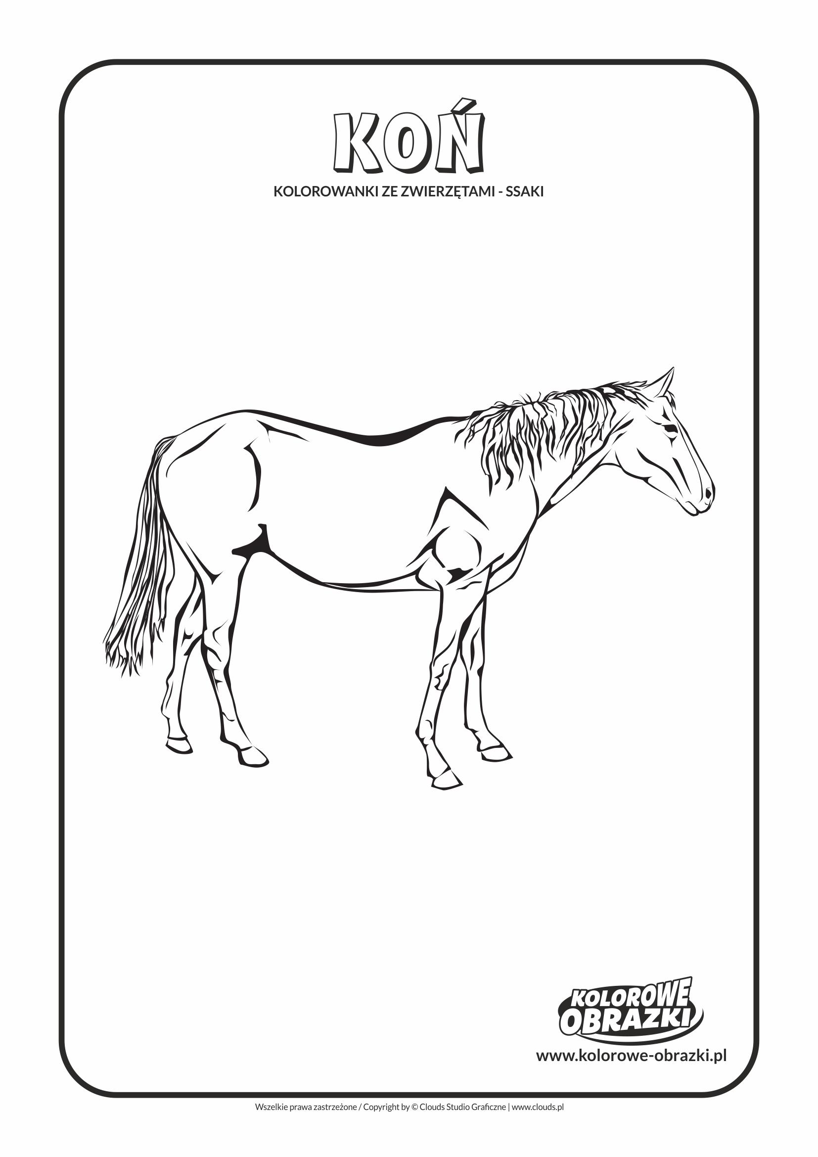 Kolorowanki dla dzieci - Zwierzęta / Koń, Kolorowanka z koniem