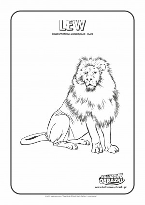 Kolorowanki dla dzieci - Zwierzęta / Lew, Kolorowanka z lwem