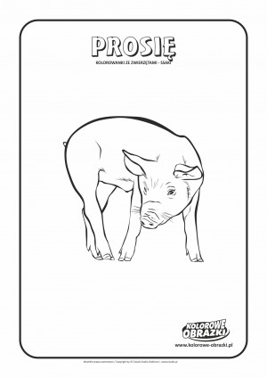 Kolorowanki dla dzieci - Zwierzęta / Prosię, Kolorowanka z prosięciem