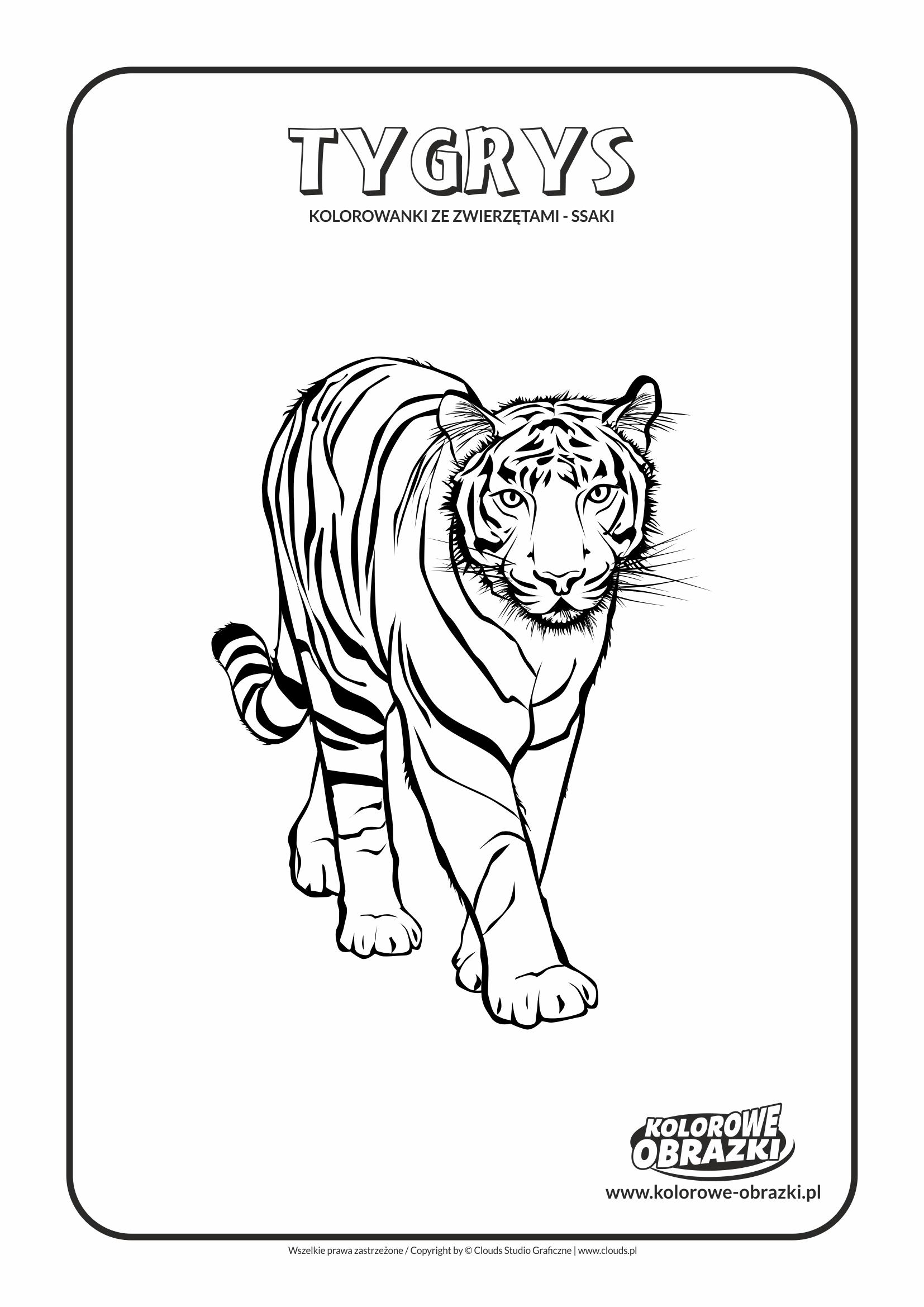 Kolorowanki dla dzieci - Zwierzęta / Tygrys Kolorowanka z tygrysem, Kolorowanka z tygrysem
