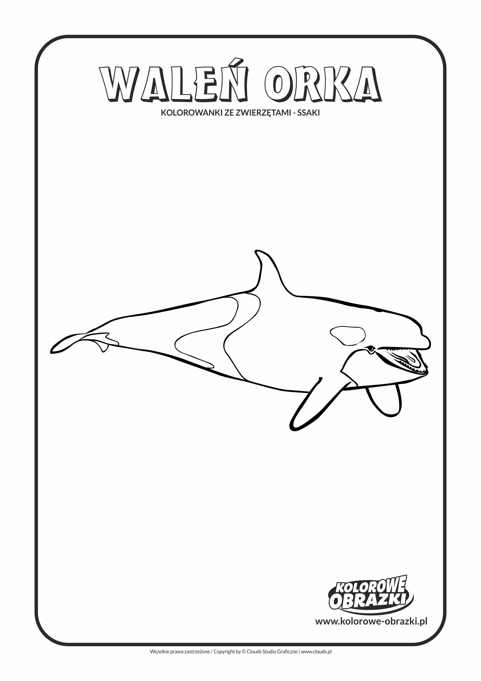 Kolorowanki dla dzieci - Zwierzęta / Waleń orka