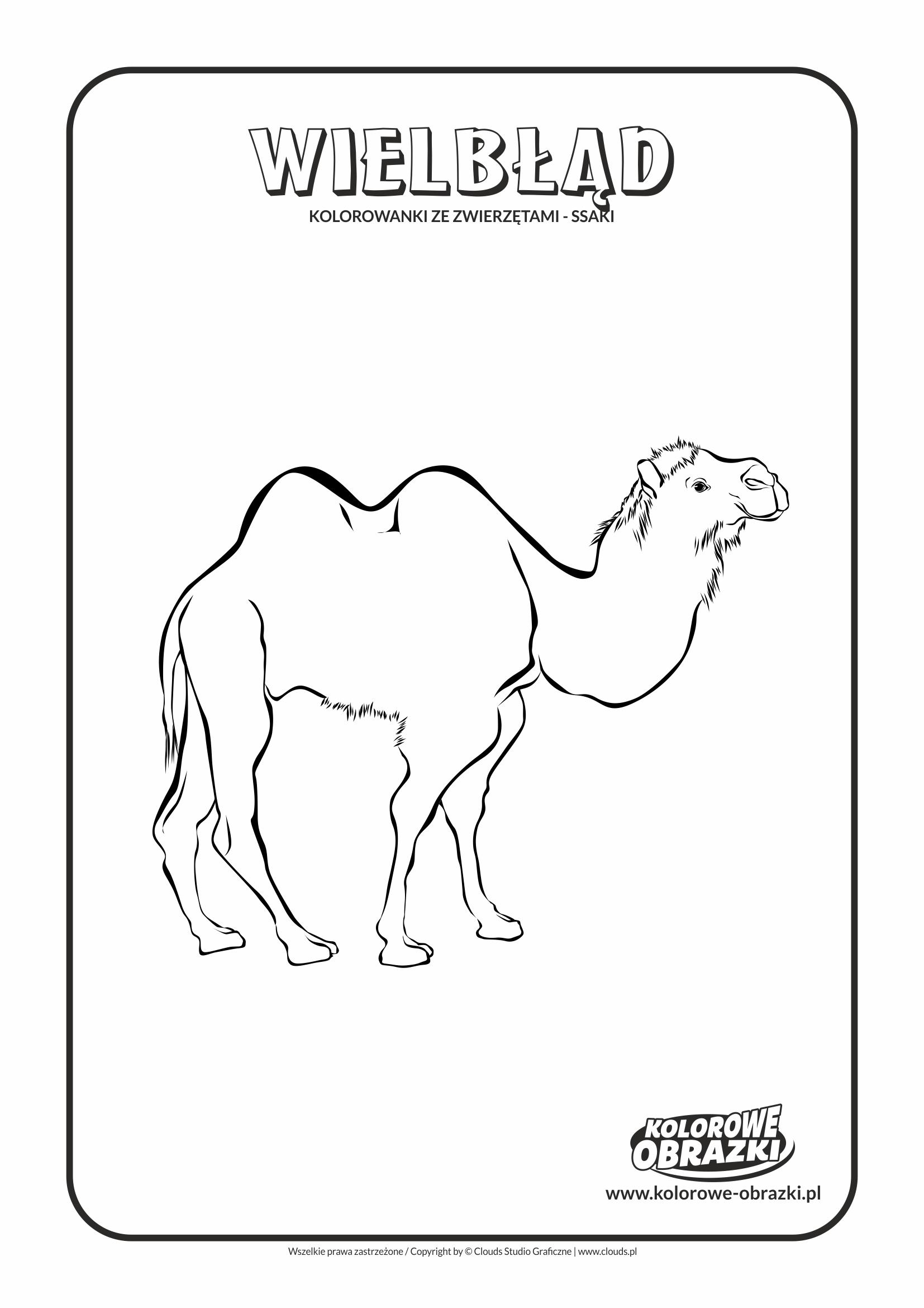 Kolorowanki dla dzieci - Zwierzęta / Wielbłąd, Kolorowanka z wielbłądem