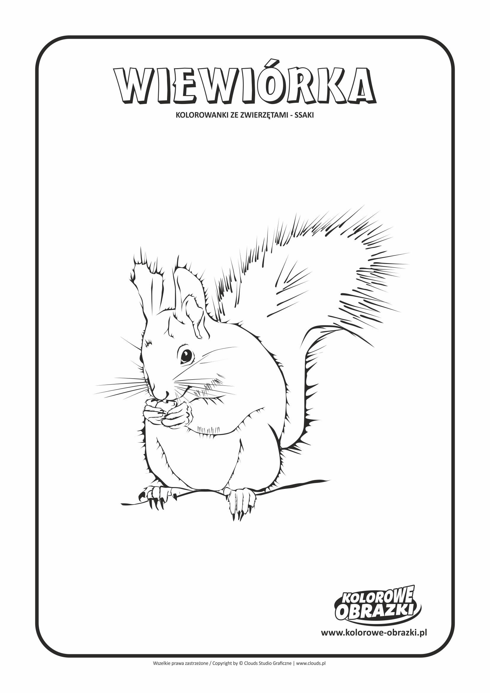 Kolorowanki dla dzieci - Zwierzęta / Wiewiórka, Kolorowanka z wiewiórką