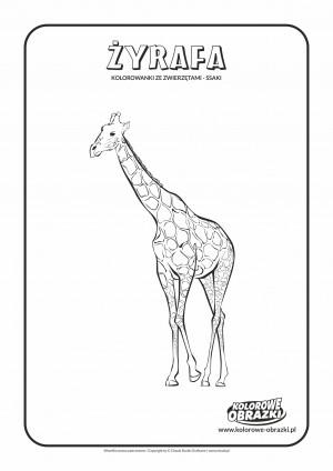 Kolorowanki dla dzieci - Zwierzęta / Żyrafa, Kolorowanka z żyrafą