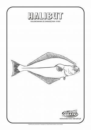 Kolorowanki dla dzieci - Zwierzęta / Halibut. Kolorowanka z halibutem
