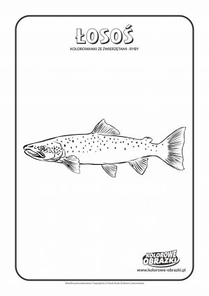 Kolorowanki dla dzieci - Zwierzęta / Łosoś. Kolorowanka z łososiem