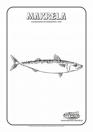 Kolorowanki dla dzieci - Zwierzęta / Makrela. Kolorowanka z makrelą