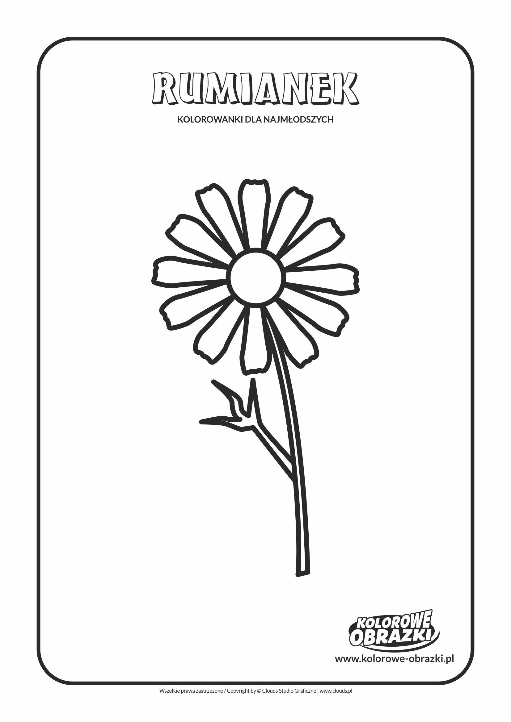 Proste kolorowanki dla najmłodszych - Kwiaty / Rumianek. Kolorowanka z rumiankiem