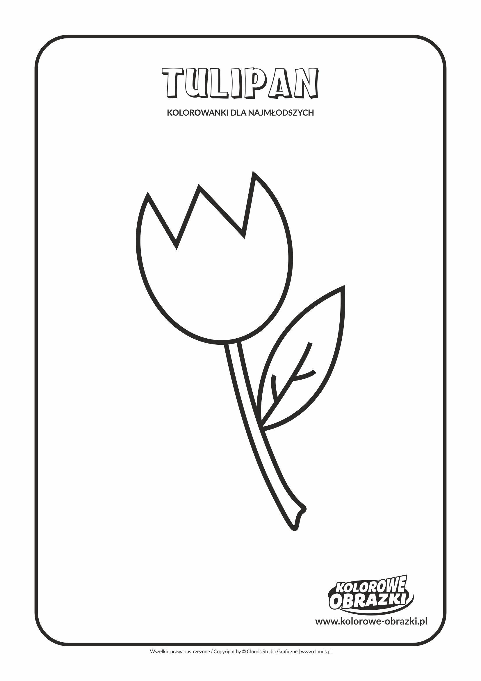 Proste kolorowanki dla najmłodszych - Kwiaty / Tulipan. Kolorowanka z tulipanem